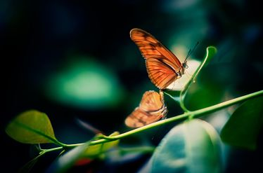 butterfly_opt